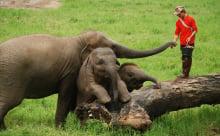 elephant_park