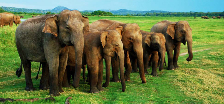 05 Days Sri Lanka Tour Package