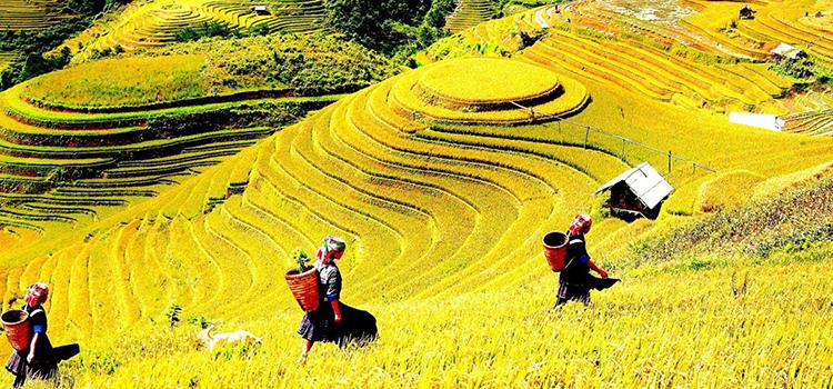 06 Days – Best of Vietnam
