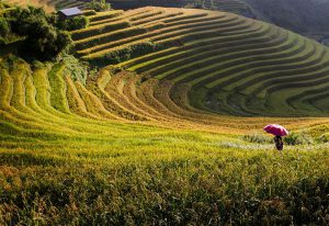 16 Days Vietnam Tour Packages