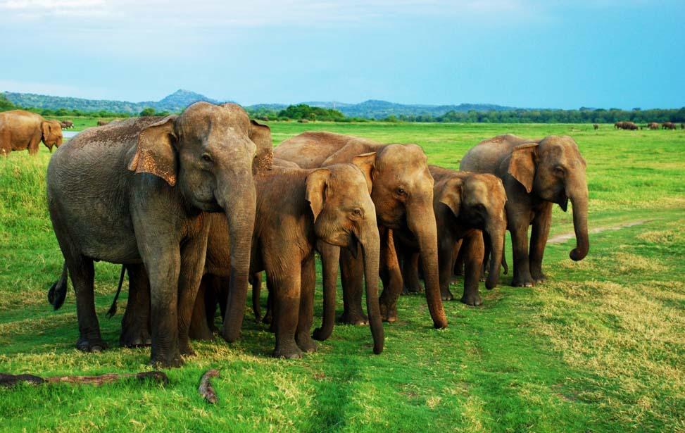 5 Days Sri Lanka Tour Packages