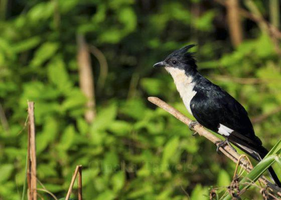 Wild life SriLanka