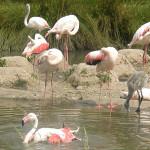 Bundala-National-Park-3
