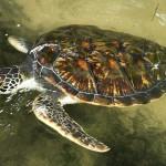 project voor het beschermen van schildpadden