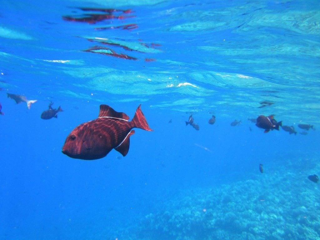 fish-183107_1280