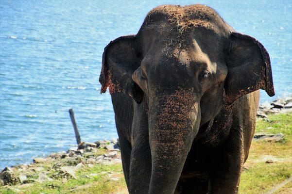 Sri Lanka Tour Packages from Goa
