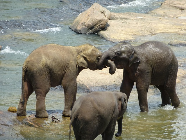 Sri Lanka Tour Packages from Trivandrum