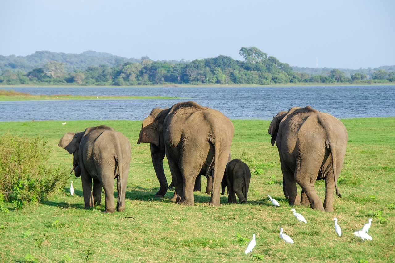 How to Spend 6 Days in Sri Lanka