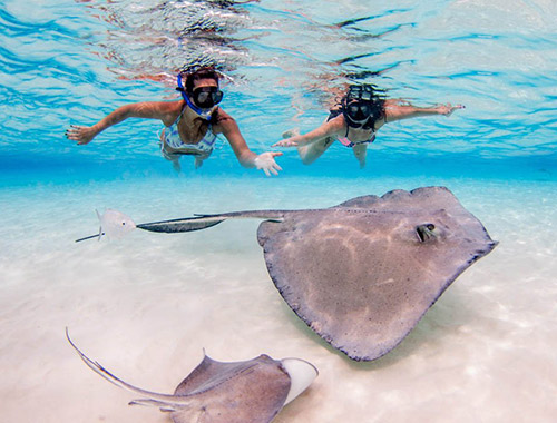 Maldives Tour Package Swim with Ray Fish