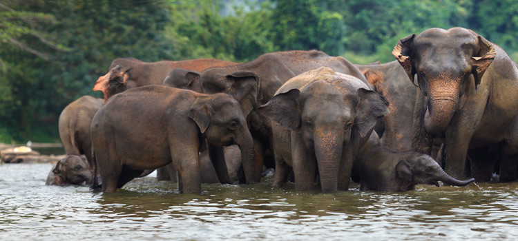 Sri Lanka Tour Package 6 Days Tour