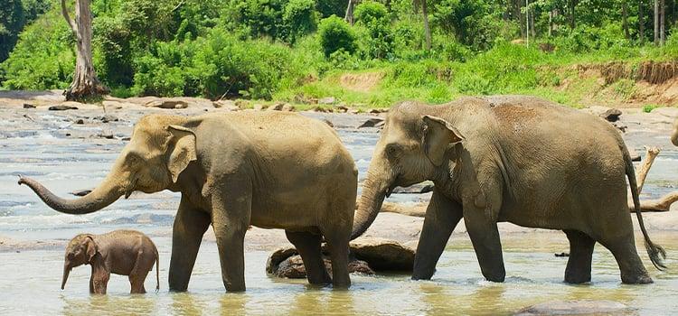 Sri Lanka Holiday Package - Kandy Trip