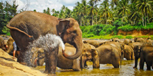 srilanka tour package 3 days pinnawala