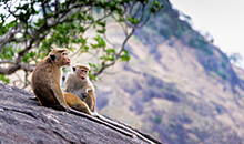 sri lanka itineraries package 12 days dambulla