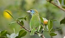 sri lanka itineraries birds in yala