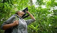 sri lanka itineraries 12 days sinharaja bird watching