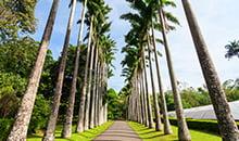 sri lanka itineraries package 12 days peradeniya botanical garden