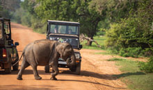 sri lanka vacations 15 days package minneriya safari
