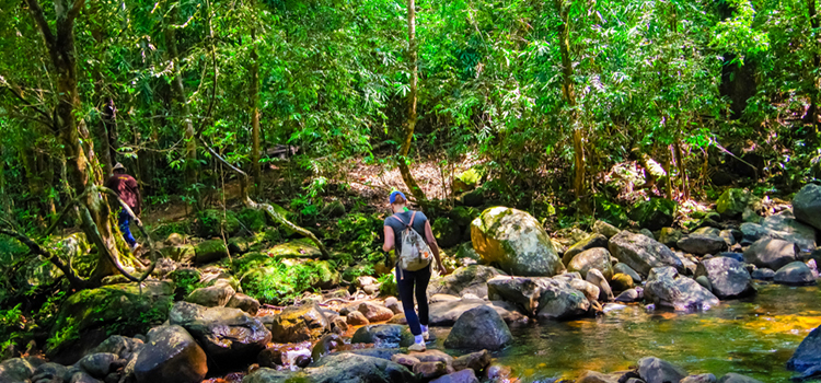sri lanka itineraries sinharaja rain forest