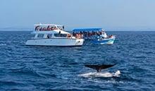 sri lanka itineraries package 12 days mirissa whale watching