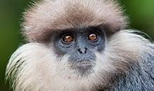 sri lanka itineraries 12 days sinharaja trekking and wild monkey